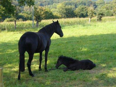 """""""Le septième jour Dieu s'est reposé et le cheval est né dans son rêve..."""""""