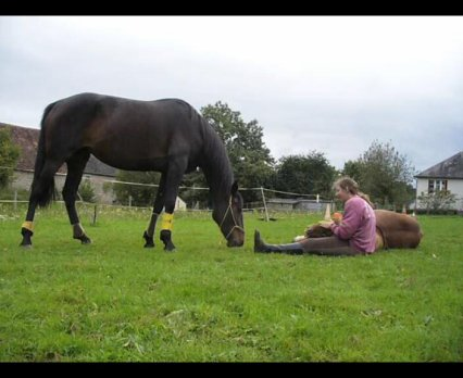 """""""Finalement, dresser un cheval, ce n'est pas en faire un robot ni une machine quelconque, mais, en lui gardant sa fraîcheur, un collaborateur obéissant."""""""