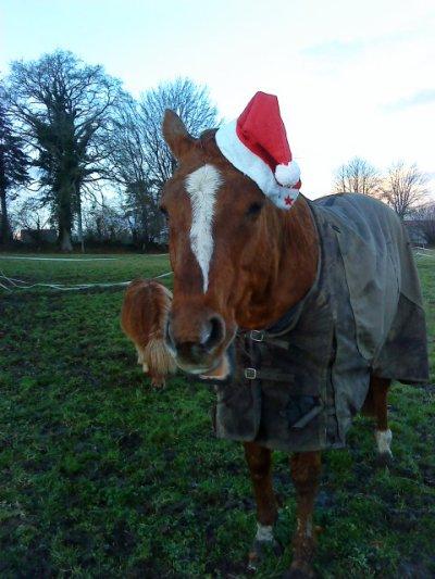 """"""" La vue de ce petit cheval m'impressionna d'une manière que je ne puis très bien expliquer. Il était plus qu'exceptionnellement fort, rapide et superbe dans sa façon de se mouvoir, il me faisait rêver."""""""