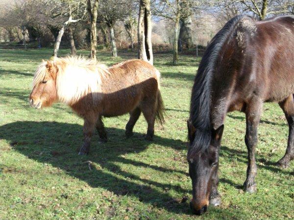 """"""" On tombe amoureux d'un cheval comme on tombe amoureux d'un homme ou d'une femme.  Parfois, c'est dans l'instant que l'on ressent un amour foudroyant. Même un pratiquant averti peut succomber au charme d'un cheval """""""