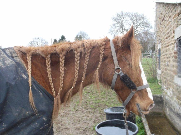 """""""L'équitation est le seul sport Individuel qui se pratique à Deux . """""""
