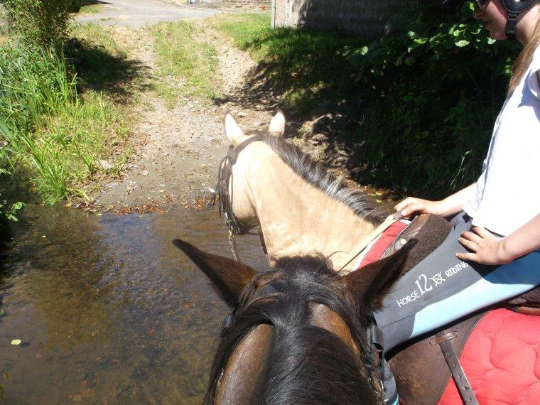 'Tous les cavaliers, si ils durent assez longtemps, apprennent que l'équitation est sous toutes formes un sport à vie et de l'art, un effort qui est à la fois familier et nouveau à chaque fois que vous prenez le cheval de son écurie ou de son pré.'