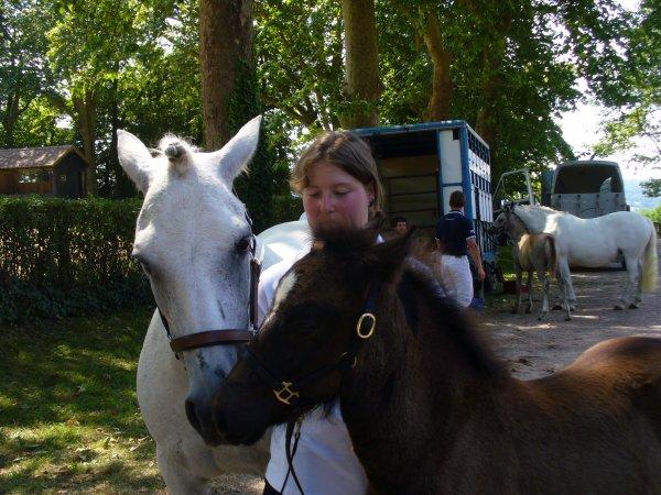 """Au """"Versailles du Cheval"""", découvrez un patrimoine vivant et culturel dédié au cheval au c½ur d'une grande région d'élevage !"""