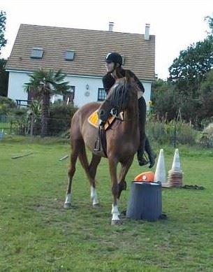"""""""Et vient le moment où il n'y a plus maître, ni monture : le cavalier fusionne littéralement avec le cheval pour devenir alors un être fabuleux."""""""