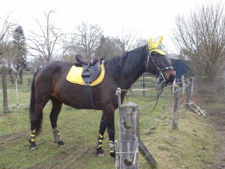 39 un cheval aime la libert le cheval de travail fatigu va se rouler sur le sol ou se. Black Bedroom Furniture Sets. Home Design Ideas
