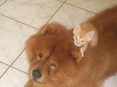 mon chien et mon chat