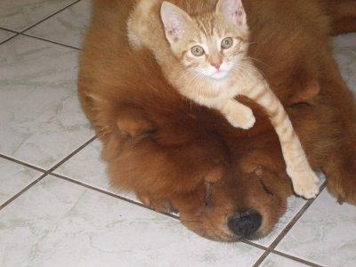 mon chien et mon chat plus grand