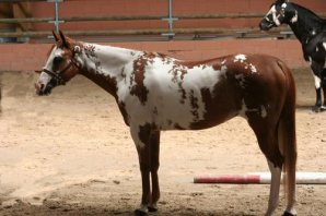 Le Paint Horse