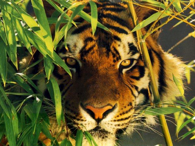 La planète en danger ! SOS animaux en détresse !