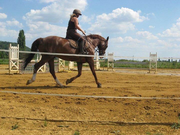 ma vie,  mes chevaux, et moi