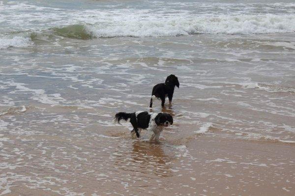 Izzy, Ioko et Victoria dans l'ile d'oleron mai 2014
