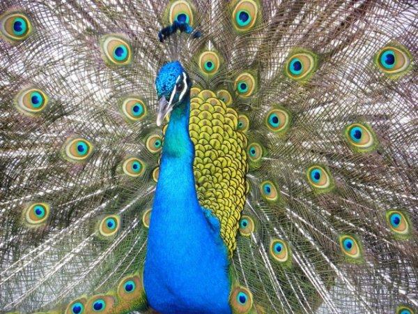 wonderful colors...