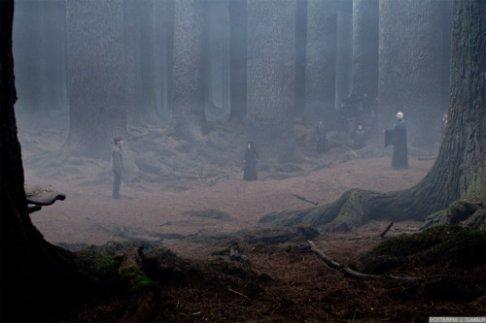 """Résultat de recherche d'images pour """"forêt interdite harry potter"""""""