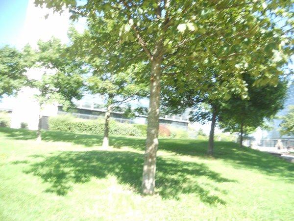 Fin de la séance photos dans le parc près de chez moi :3 ^^