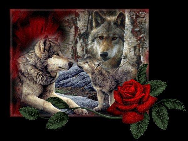 loups et ameridiens