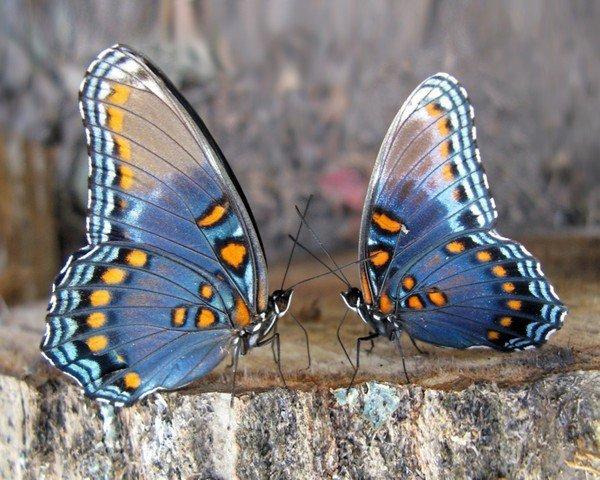papillons,coccinelles
