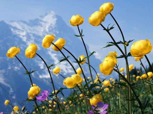 fleurs et arbres a fleurs