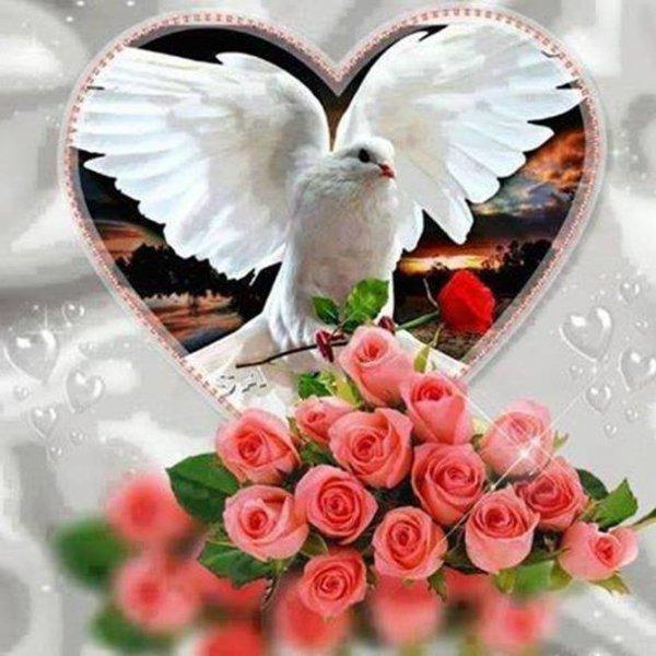 colombes ( que la paix entre dans vos maisons , mes amis  e)
