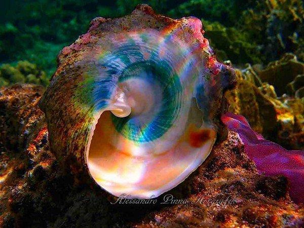 sous l ocean