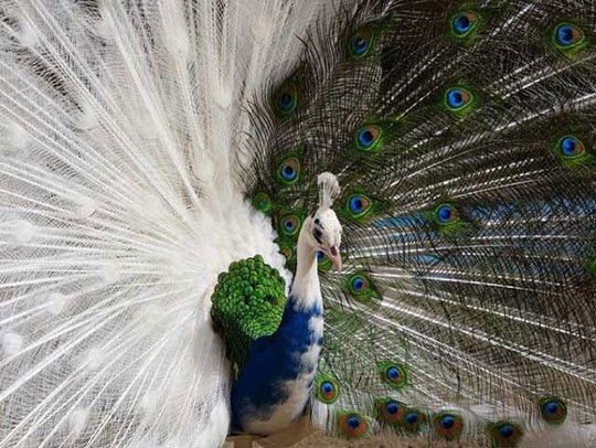 animaux a plumes