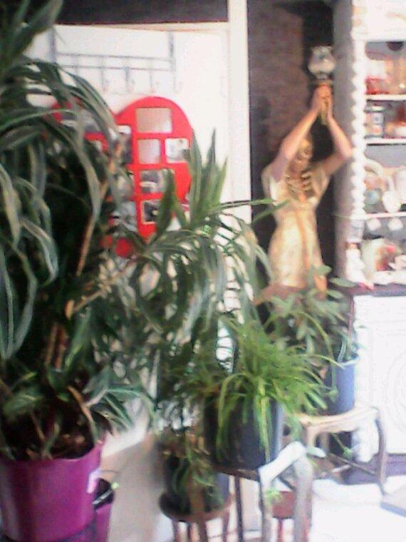 Mes plantes grandissent trop vite pourtant je ne met pas d'engrais