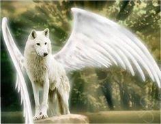 un ange, un loup d'mour