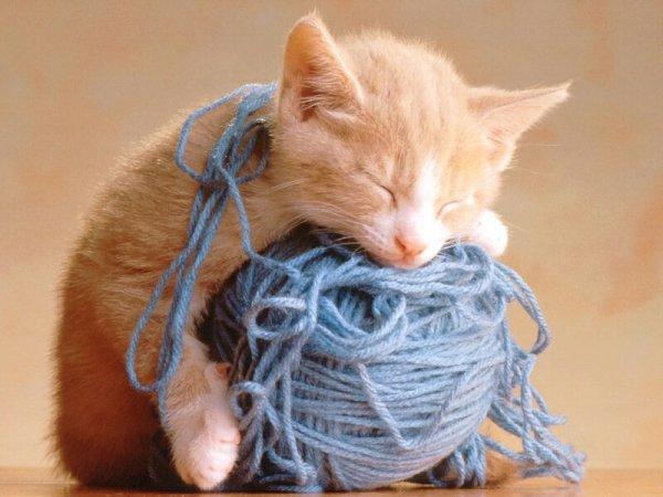 passion des chats