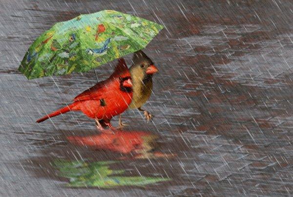 bon mardi a tous sous la pluie!!