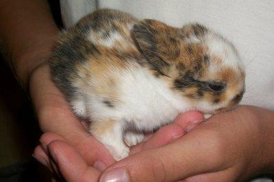maman et les petit lapin on un mois et 4 jours