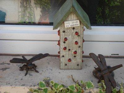Coccinelle dans la maison ventana blog - Acheter des coccinelles ...