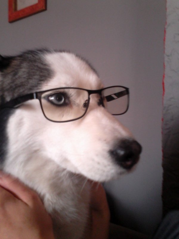 ma chienne porte des lunettes