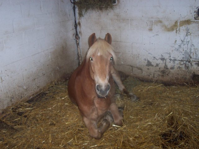>>my horses<<