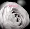 Heloise1501