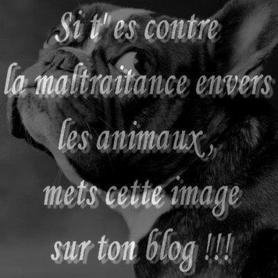NON A LA MALTRAITANCE DES ANIMAUX ( pris sur le blog de thforever)