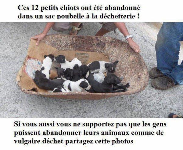 N ABANDONNONS PAS LES ANIMAUX ( pris sur le blog de thforever)