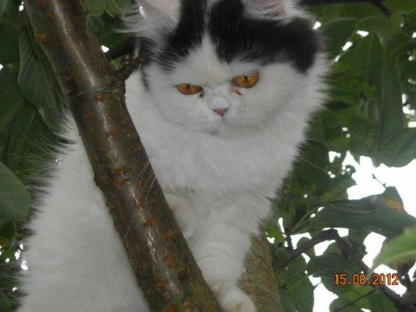 la mere de mon chaton