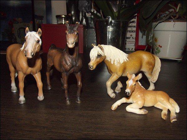 Nouveaux chevaux, nouveaux projets.
