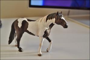Projet n° 5 : Cheval Quarter-horse.