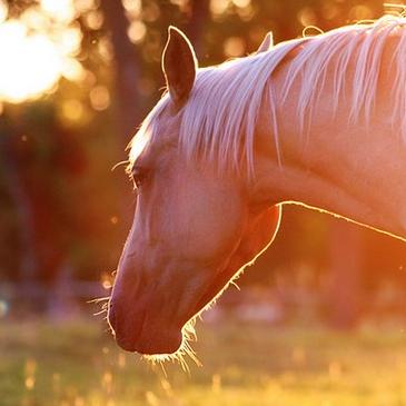 Customisation et ventes de chevaux et poneys !