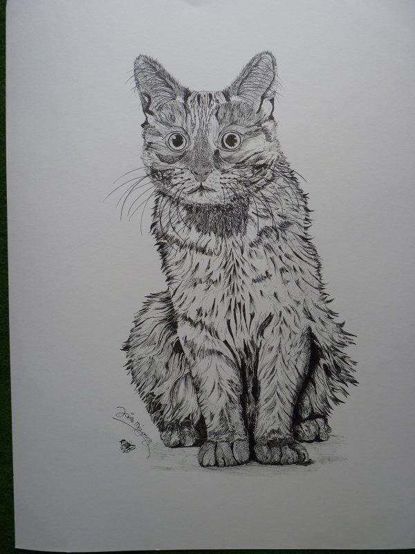 Mon  quatrième grand chat ...... 50x60  papier aquarelle......300grs