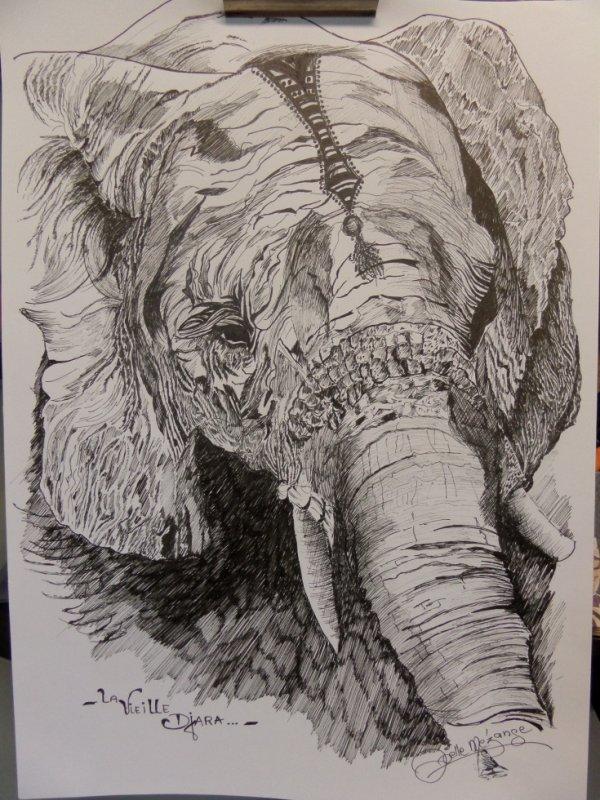 """éléphant  """"la vieille Djara"""" encre de chine"""