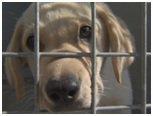 SPA, pas la vie d'un chien