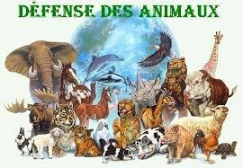 La défense des animaux