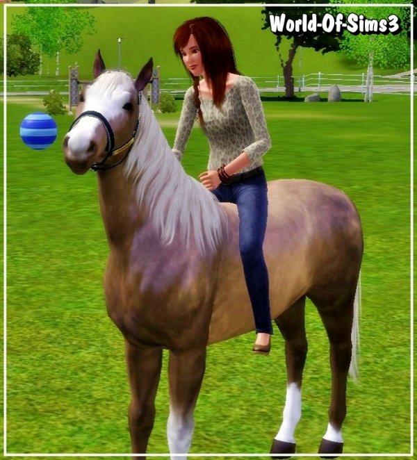 Des chevaux de stars !