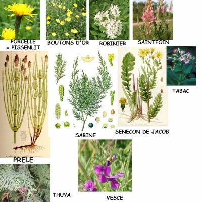 les plantes toxiques 3 eme partie hom opathie et phytoth rapie pour animaux. Black Bedroom Furniture Sets. Home Design Ideas