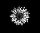 Photo de Fleur-Boheme