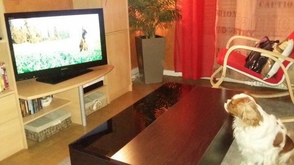 TV dogs