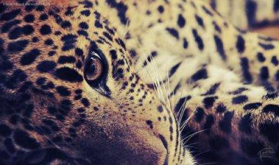 Wenn Menschen denken, dass Tiere nicht fühlen müssen Tiere fühlen, dass Menschen nicht denken.