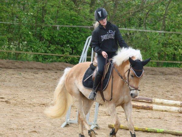 C'est avec C'est avec une main légère que l'on apprend au cheval à travailler, redresser l'encolure, fléchir la tete ...