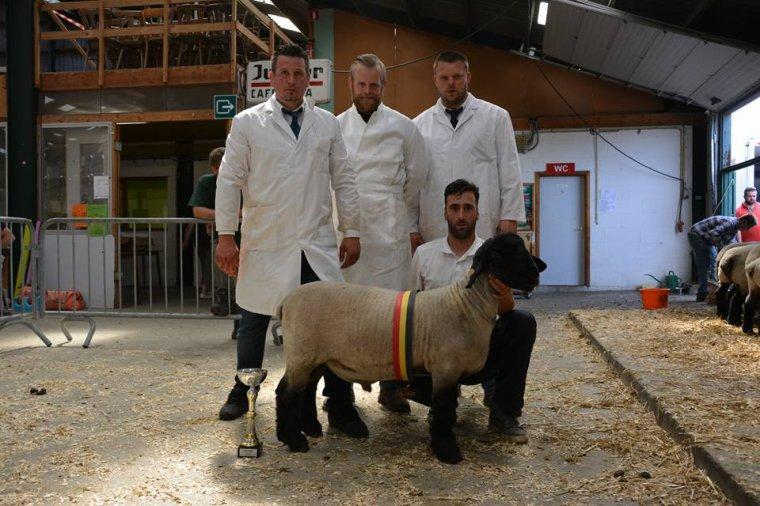 nouvel agneau pour la saison père solwaybank highlight de Bert Laeremans
